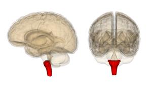 「脳幹」の働きを回復させる