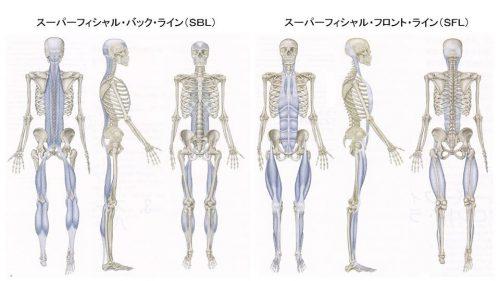 筋膜の繋がり